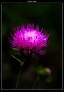 Une zoulie fleur !